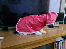Capa de chuva para cachorro de porte médio