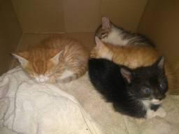 Lindos gatinhos para adoção!