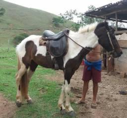 Égua pampa e filhote