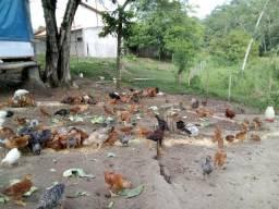 Casa das Aves