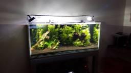 Vendo aquário 312Lt plantado 1,25x0,50x0,50