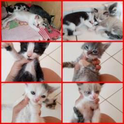 Gatinhos fofos para adoção ?