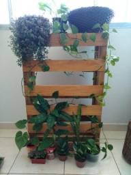 Plantas naturais + base pallet - PROMOÇÃO