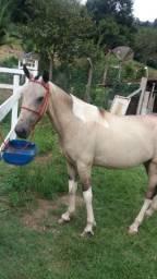 Cavalo 4 anos Pura Macha Picada , manso e ligeiro