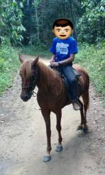 Égua mangalarga parida