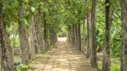 Áreas com Icmbio no Pará icmbio para compensação florestal bioma amazônico