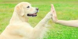 Adestramento e Dog Walking