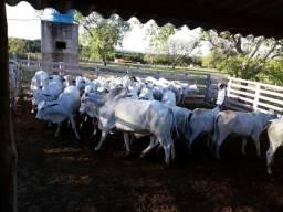 Ótima fazenda com 475 hectares no Maranhão. Referência: 0040