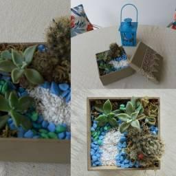 Terrário suculenta e cacto florido naturais