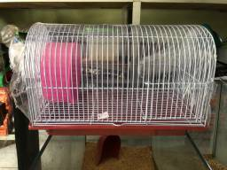 Gaiola de Hamster Especial teto curvado -  última unidade