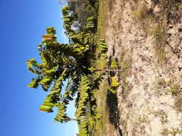 Chácara 6 hectares.