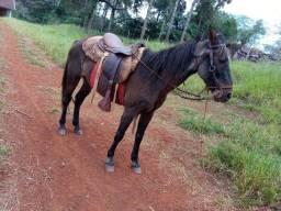 Vendo cavalo pra criança