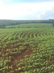 Fazenda Lavoura em Pedrinópolis MG