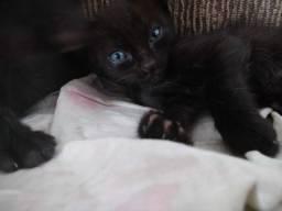 gato filhote preto