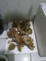 Rochas para aquário