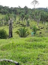 Fazenda na cidade de ITAITUBA-PA