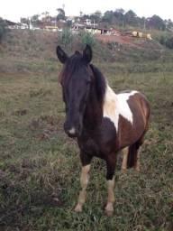 """Vendo cavalo """"descrição"""""""
