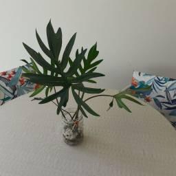 Planta natural em vaso de vidro