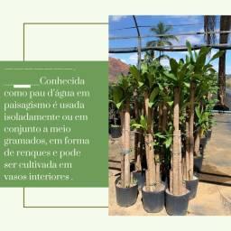 Plantas para jardim e venda no atacado