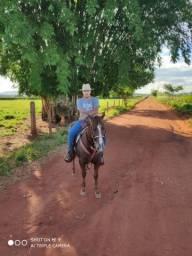 Vendo cavalo Quarto de milha Barato