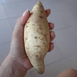 Batata doce branca