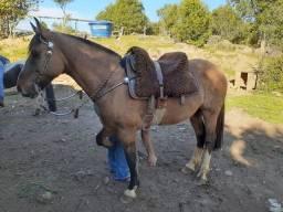Cavalo Crioulo Gatiado