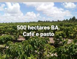 Fazenda 25 alqueirao BA (500 há)