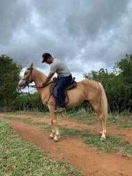 Cavalo Margalarga Marchador