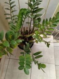 Lindos vasos plantas