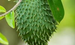Viveiro de mudas frutas nativas entregas sao lourenço e regiao sul de minas