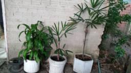 Vazos com plantas