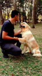 Adestrar o Seu Cão Passo a Passo