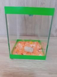 Aquário pequeno peixe Beta