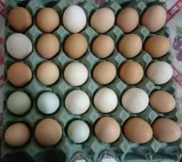 Ovos caipira fertil para chocar