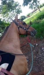 Vende se Cavalo e Poutra