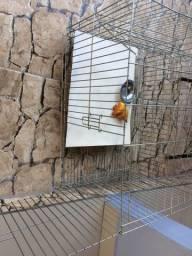 Vendo essa gaiola