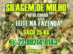 + Leite na Fazenda Silagem de Milho