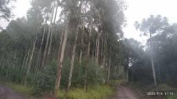 Fazenda 89 alqueires em Guaraniaçu PR