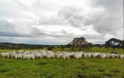 PROCURO sítio/fazenda para atividade pecuária