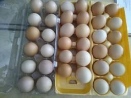 Promoção ovos galados de raça a partir de R$35 a dúzia