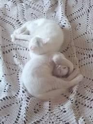 Doacao gatos