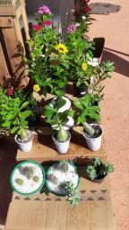 Plantinhas, cactos, suculentas e rosas do deserto!