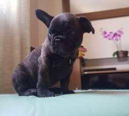 Bulldog Francês Fêmea Com Garantia