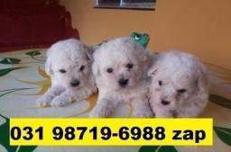Canil Belíssimos Filhotes Cães BH Poodle Bulldog Basset Lhasa Beagle Yorkshire