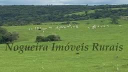 Fazenda de 58 alqueires na região, usada na pecuária (Nogueira Imóveis Rurais)