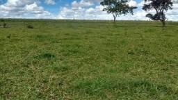 Fazenda 58.000 hectares