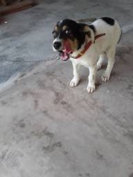 Cachorro com 3 meses