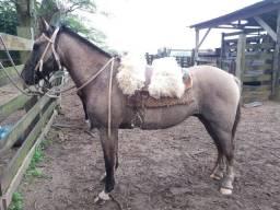 Vendo cavalo lobuno