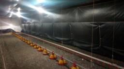 Tunel door janelao para aviarios de frango