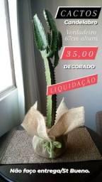 1 Cactos Decorado Candelabro verdadeiro 67cm altura LIQUIDAÇÃO 35,00